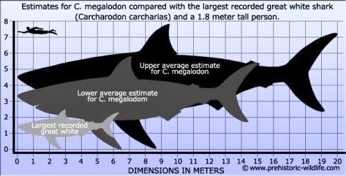 tiburon ballena vs megalodon - Buscar con Google | afiches ...