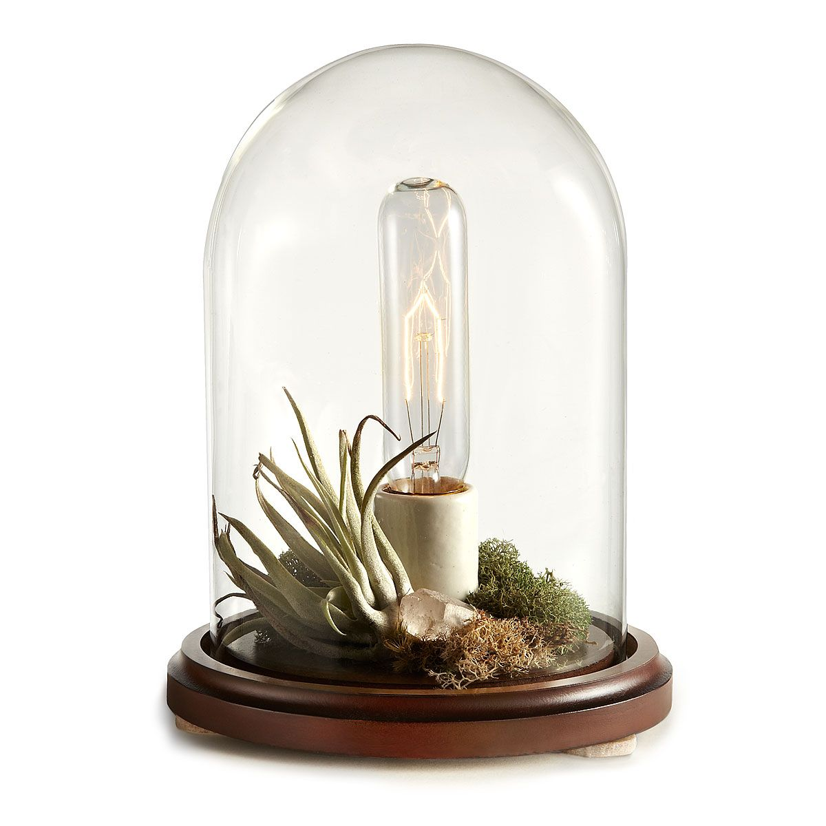 Terra table lamp terraria glass lights and plants