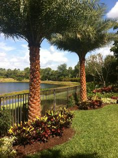palm tree landscape on Pinterest Florida Date Palms and Florida