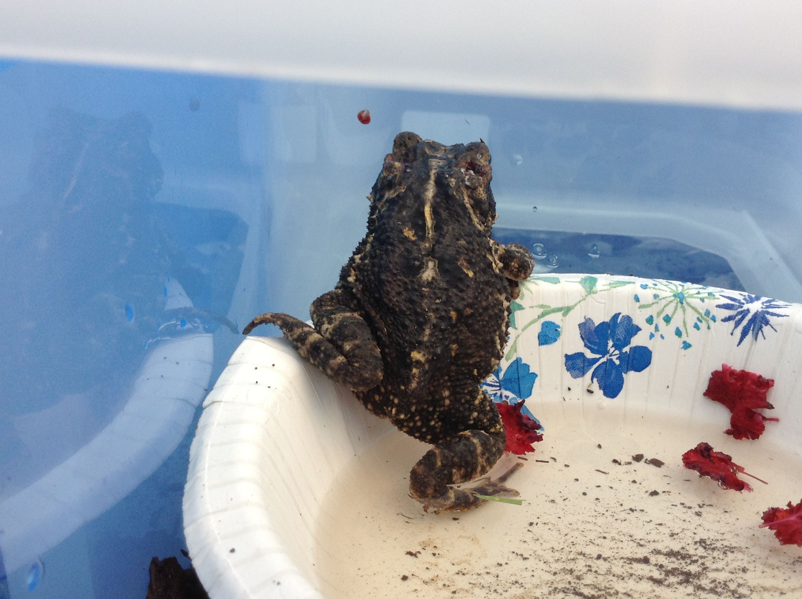 Just found a hurt frog. Made a habitat for the little guy❤❤❤❤