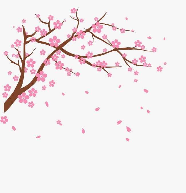 Vector Cherry Vector Cherry Blossoms Flower Png Transparent Clipart Image And Psd File For Free Download Cherry Blossom Art Cherry Blossom Drawing Cherry Blossom