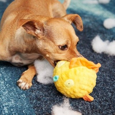Bark Blowfish Dog Toy - Bloated Barry the Blowfish