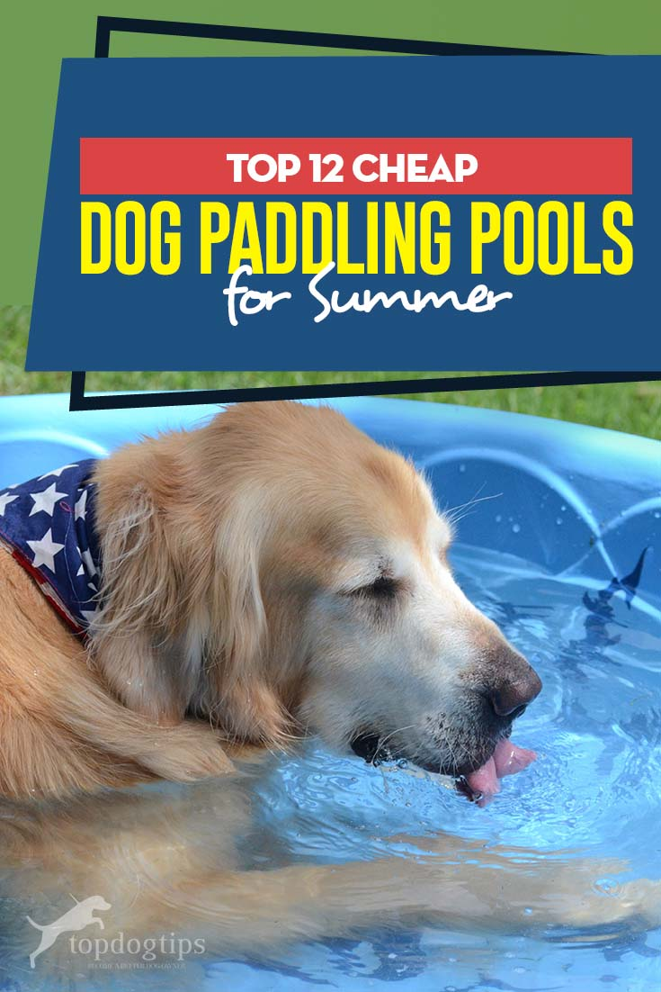12 Best Paddling Pools For Dogs Dog Pool Dogs Cheap Dogs
