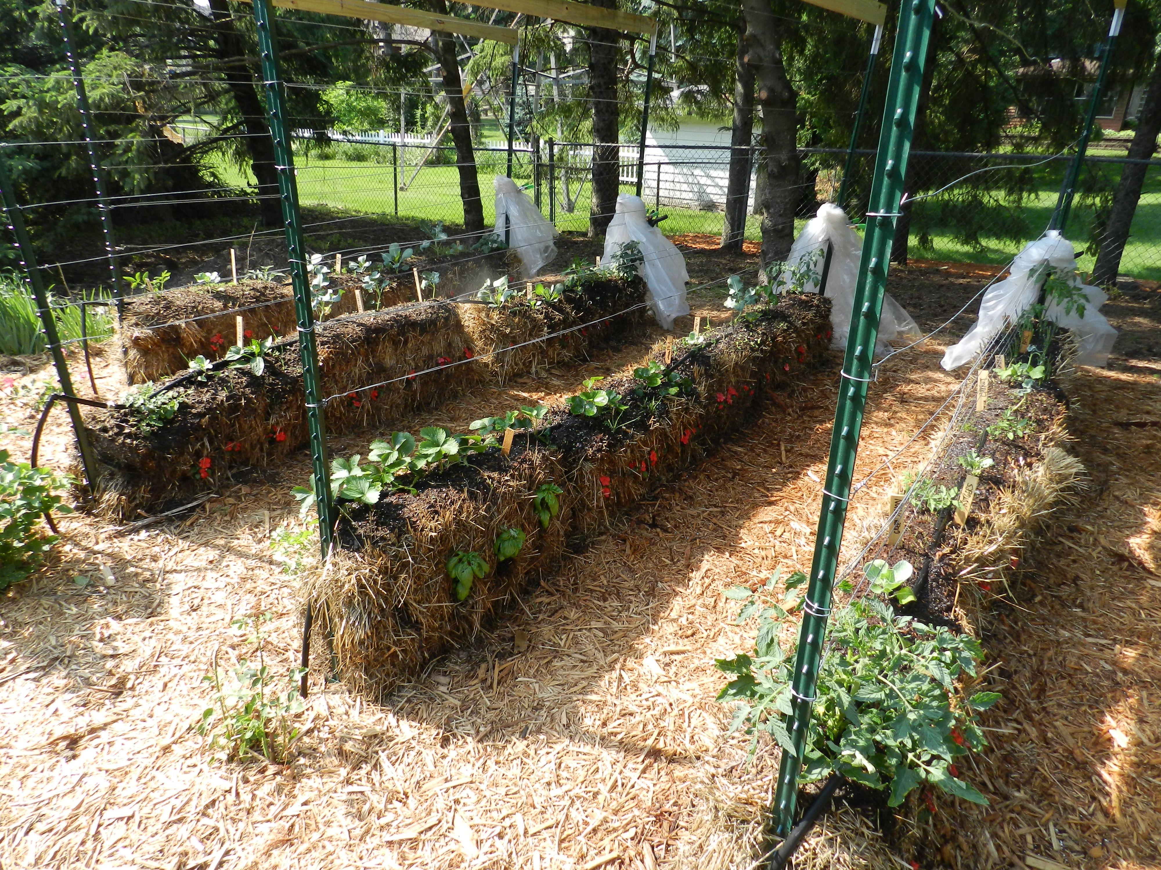 ffe7273398fe8aa6d9e85a4292494ad8 - Straw Bale Vs Hay Bale Gardening
