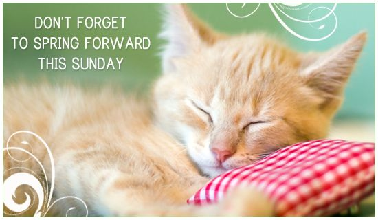 Image result for Spring forward cats