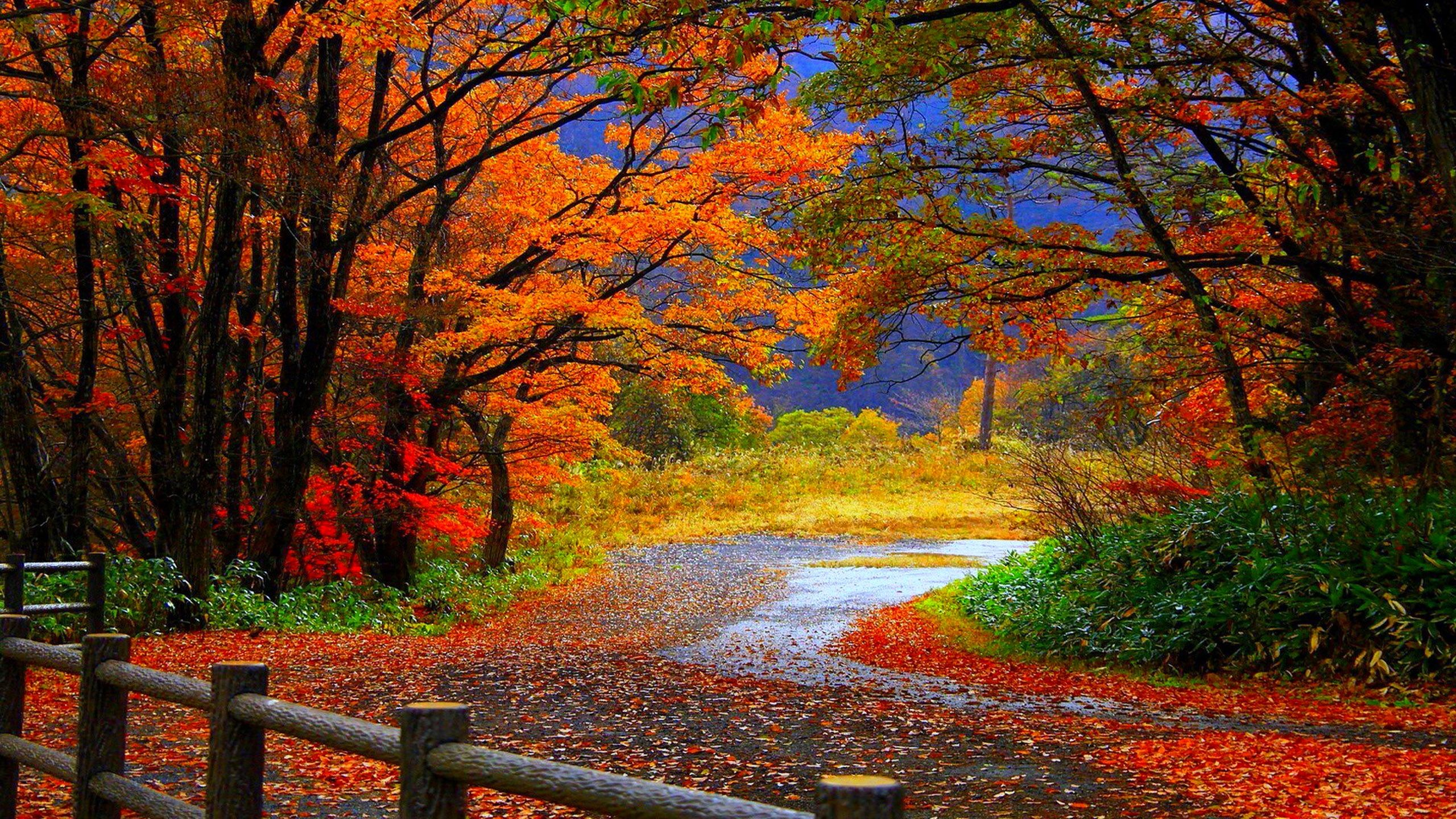 Fall Wallpaper High Definition Scenery Wallpaper Landscape Wallpaper Desktop Wallpaper Fall