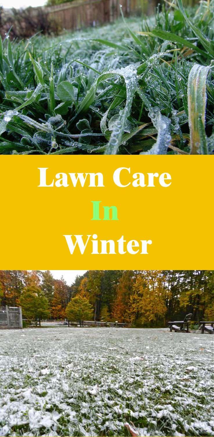 Lawn Care In Winter
