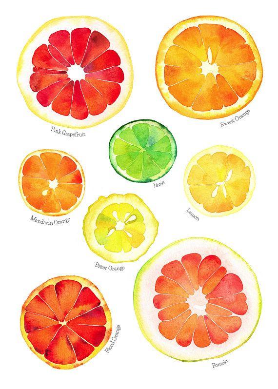 Citrus Fruits Watercolor Art Print Orange Lime Lemon With Images