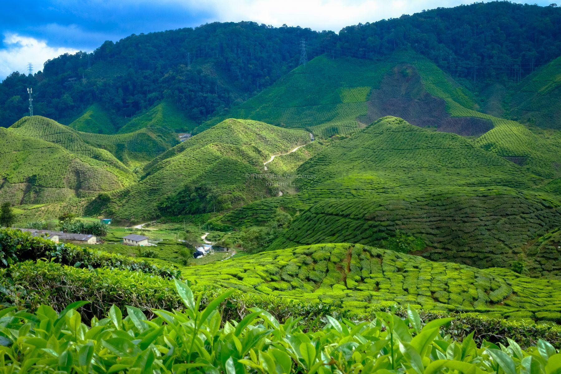 مرتفعات الكاميرون في ماليزيا الجنة الخضراء Cameron Highlands Cool Places To Visit Thailand Tourism