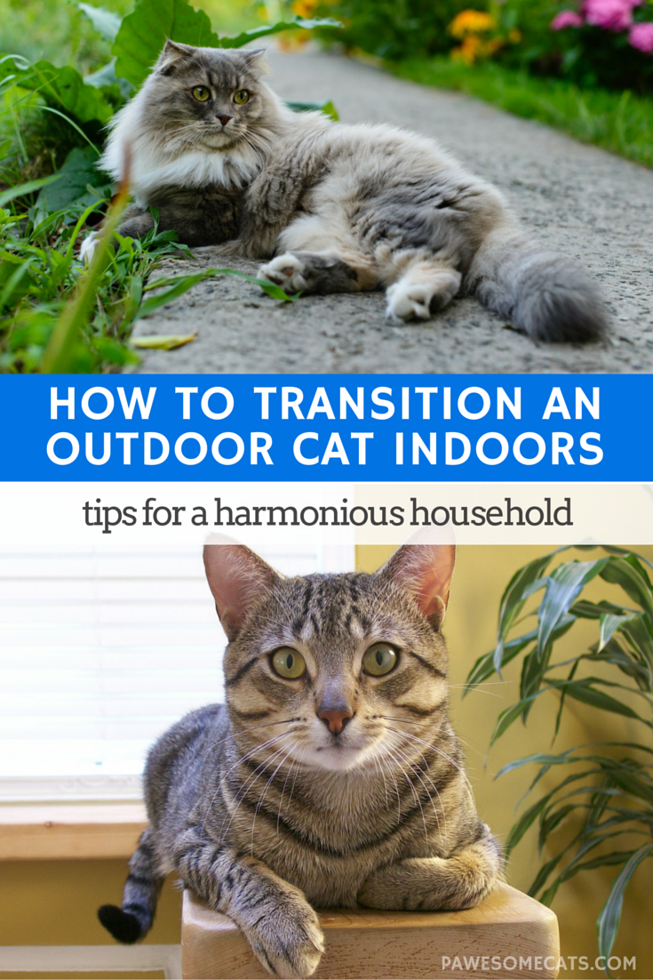 How To Transition An Outdoor Cat To An Indoor Cat Indoor Cat Cat Training Cat Care