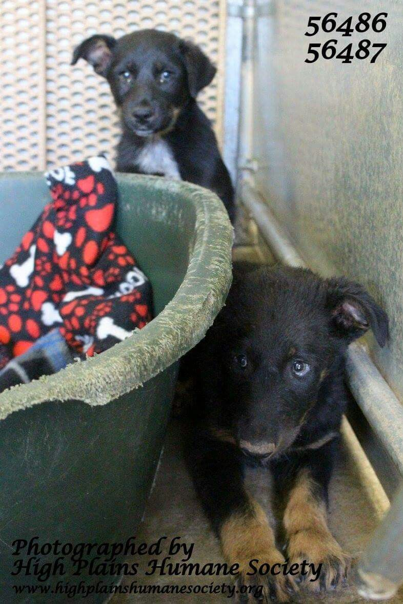 Clovis nm shelter animals looking for forever families