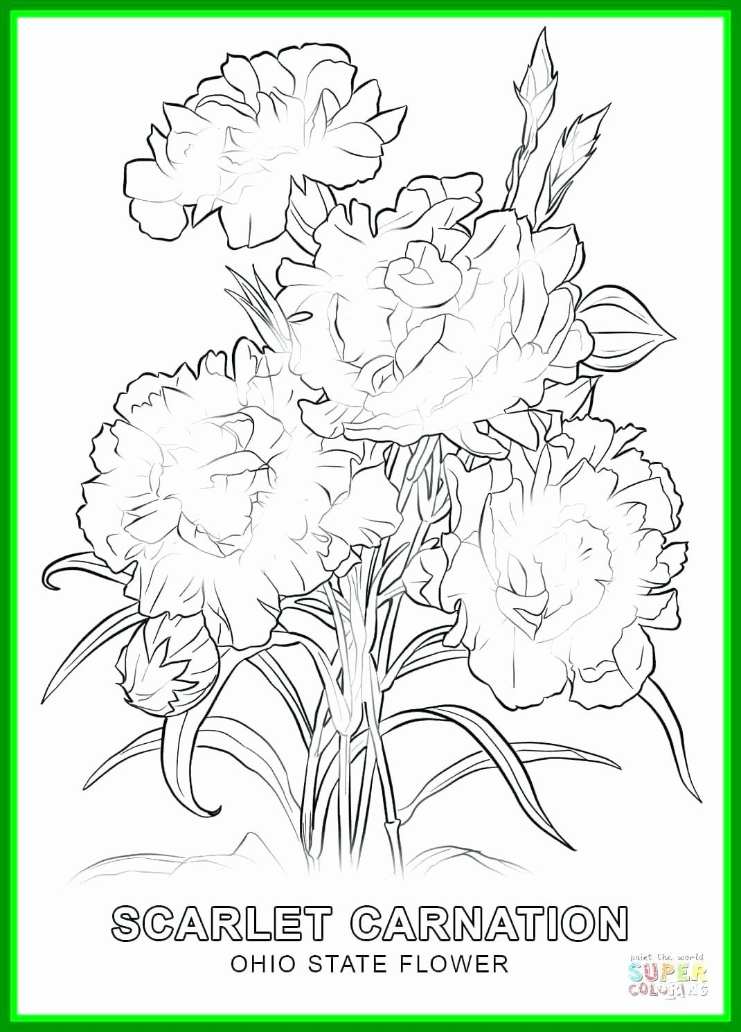 Flowers Coloring Template Fresh Collection Coloring Pages Flowers