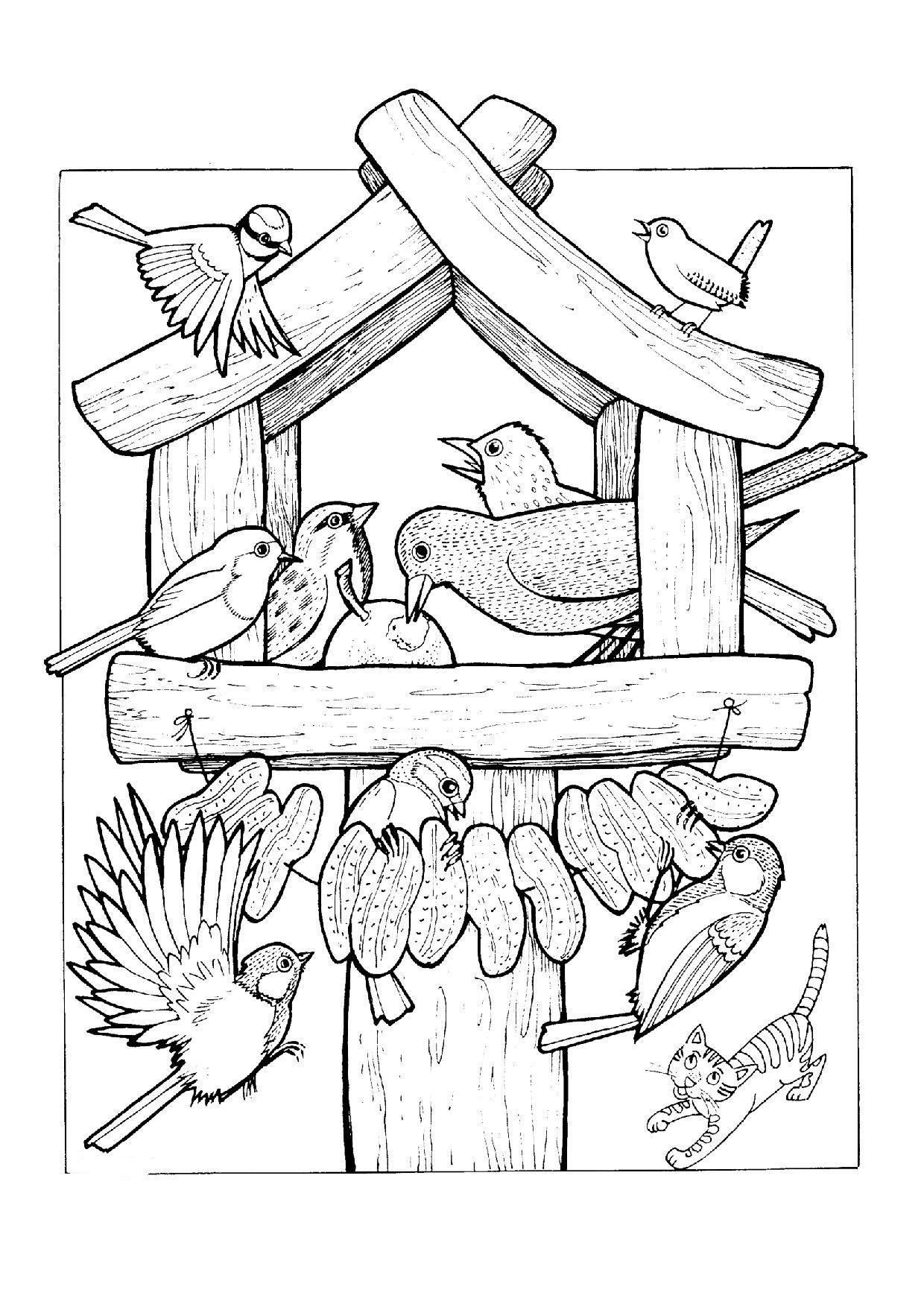 ausmalbilder vögel im winter | aiquruguay