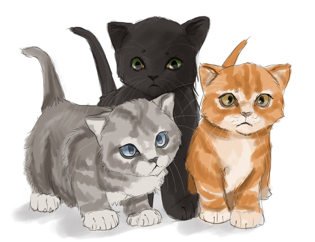 Omg at first i thought this was the original gang firepaw graypaw and ravenpaw then i realized - Desin de chat ...
