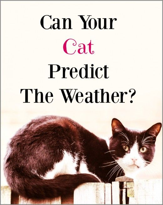 Is your cat predicting weather changes? Or is it just odd cat behavior?