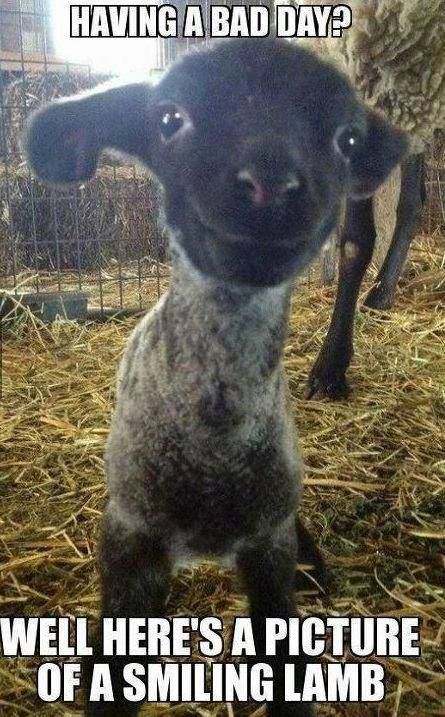 Cheer Up Bad Day Funny Funnyanimal Goat Picture Funny
