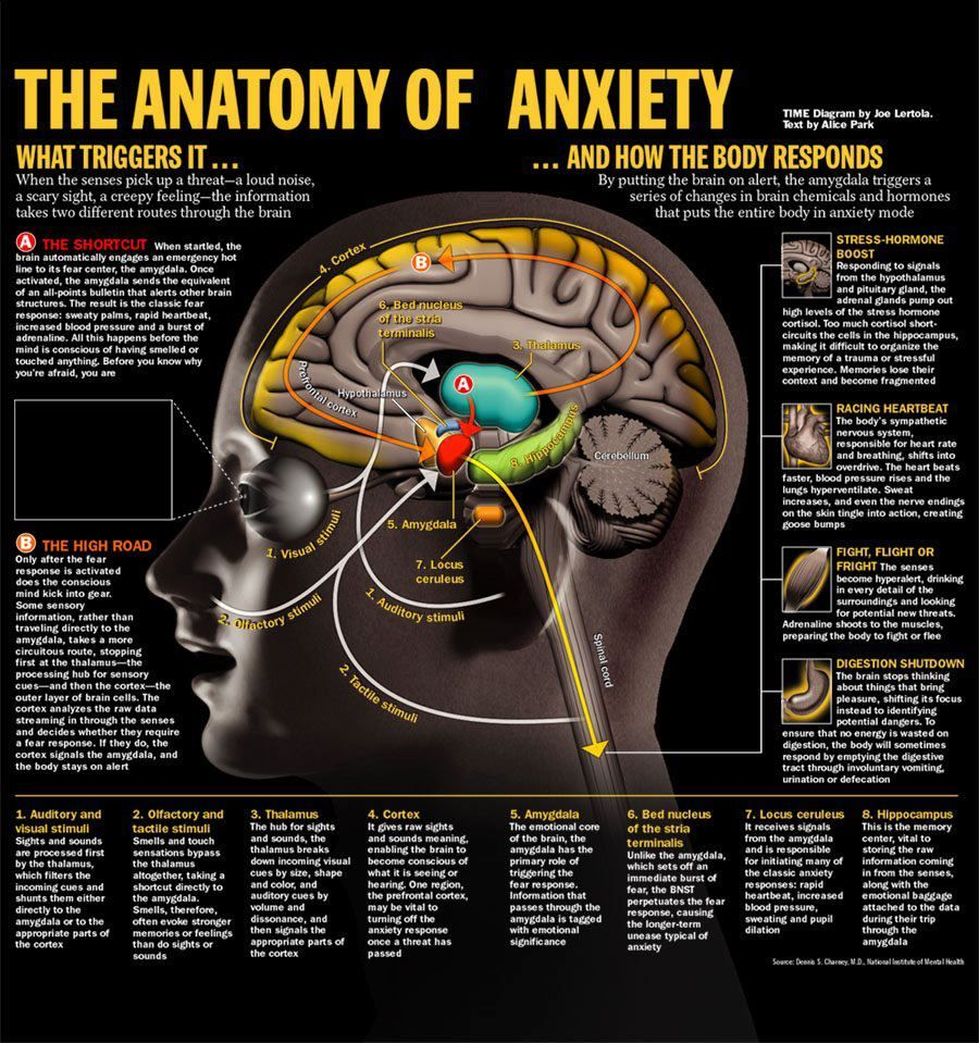 The Anatomy of Anxiety | Counseling | Pinterest | Mente sana, Mapas ...