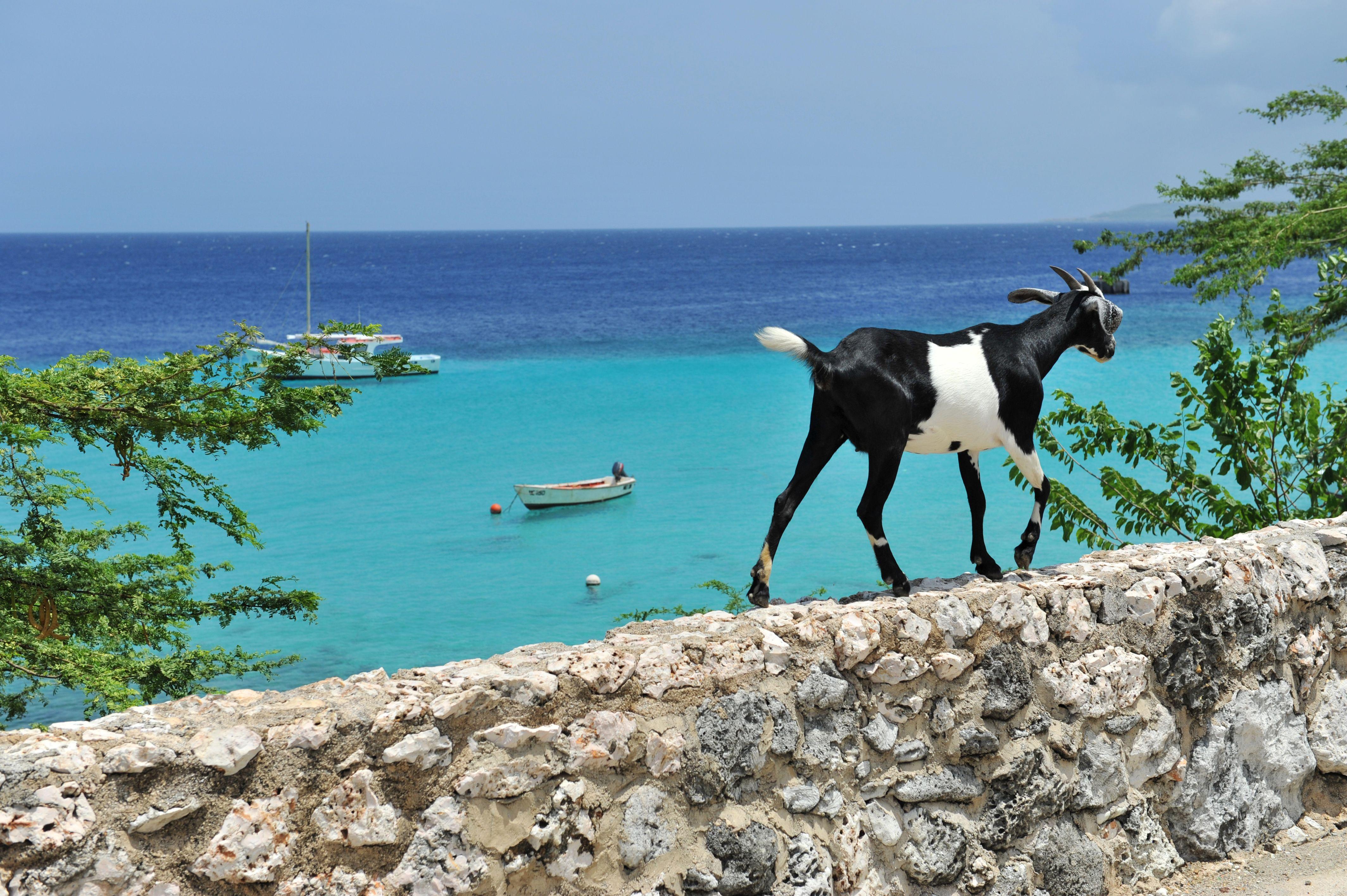 картинки греция козы фотозону организует хабаровский