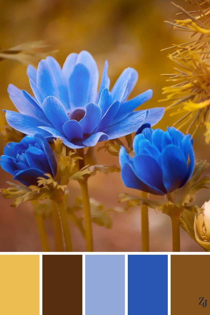 ZJ Colour Palette 584 #colourpalette #colourinspiration | Paint ...