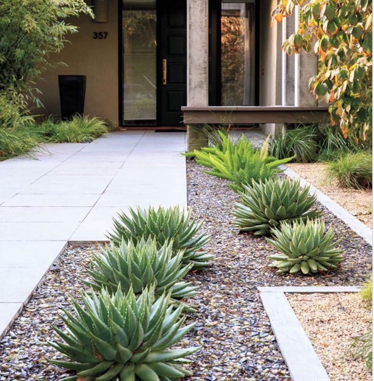 Lose the lawn before and after in palo alto aloe for Quick garden design ideas