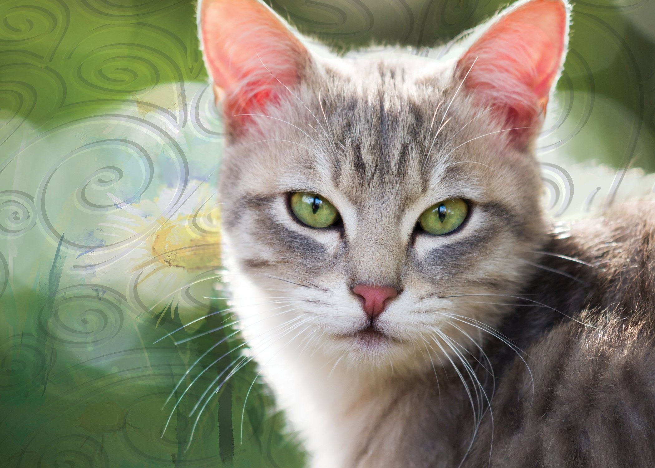 Excited To Share The Latest Addition To My Etsy Shop Cat Sympathy Greeting Card Sympathy For The Cat Lover Whose Life Long Friend An Cat Illnesses Cats Pets