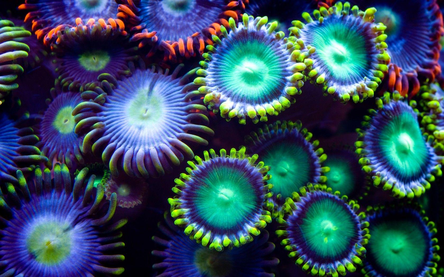 underwater plants | underwater plants colorful wallpaper ...