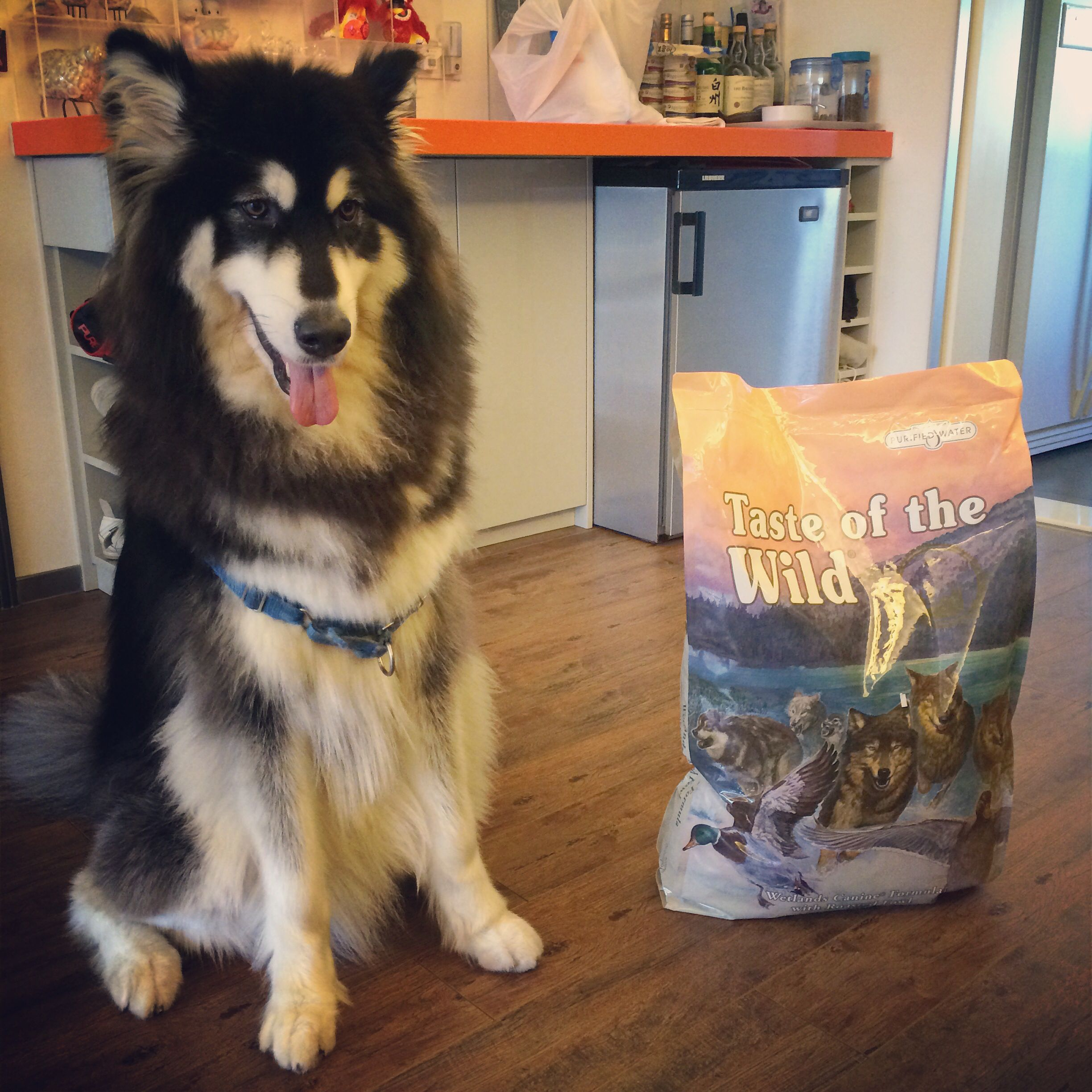 Mallie Endorses Taste Of The Wild One Of The Dog Foods That S