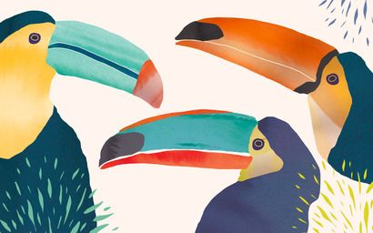 Wallpaper by Catherine Cordasco - Toucans - Kuvva wallpapers