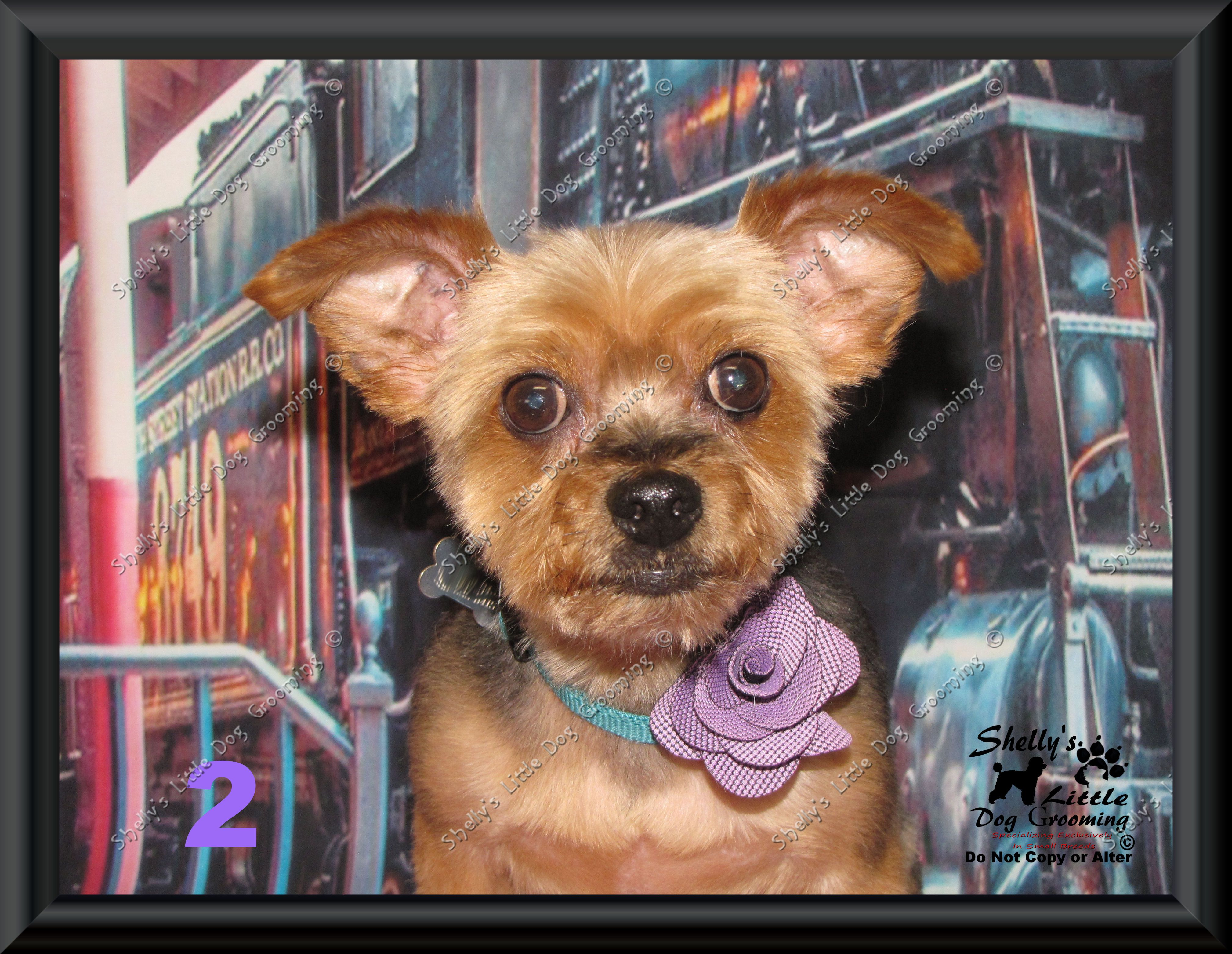 Penny Lane Little Dogs Dogs Dog Grooming