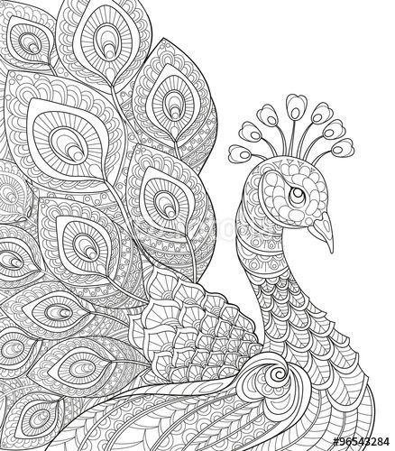Vektor peacock adult antistress coloring page black and white hand drawn doodle for