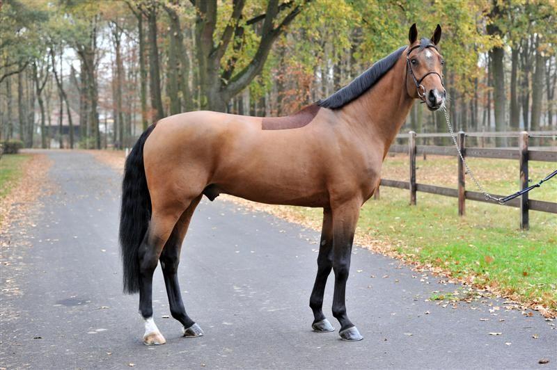 Forms - Texas Quarter Horse Association