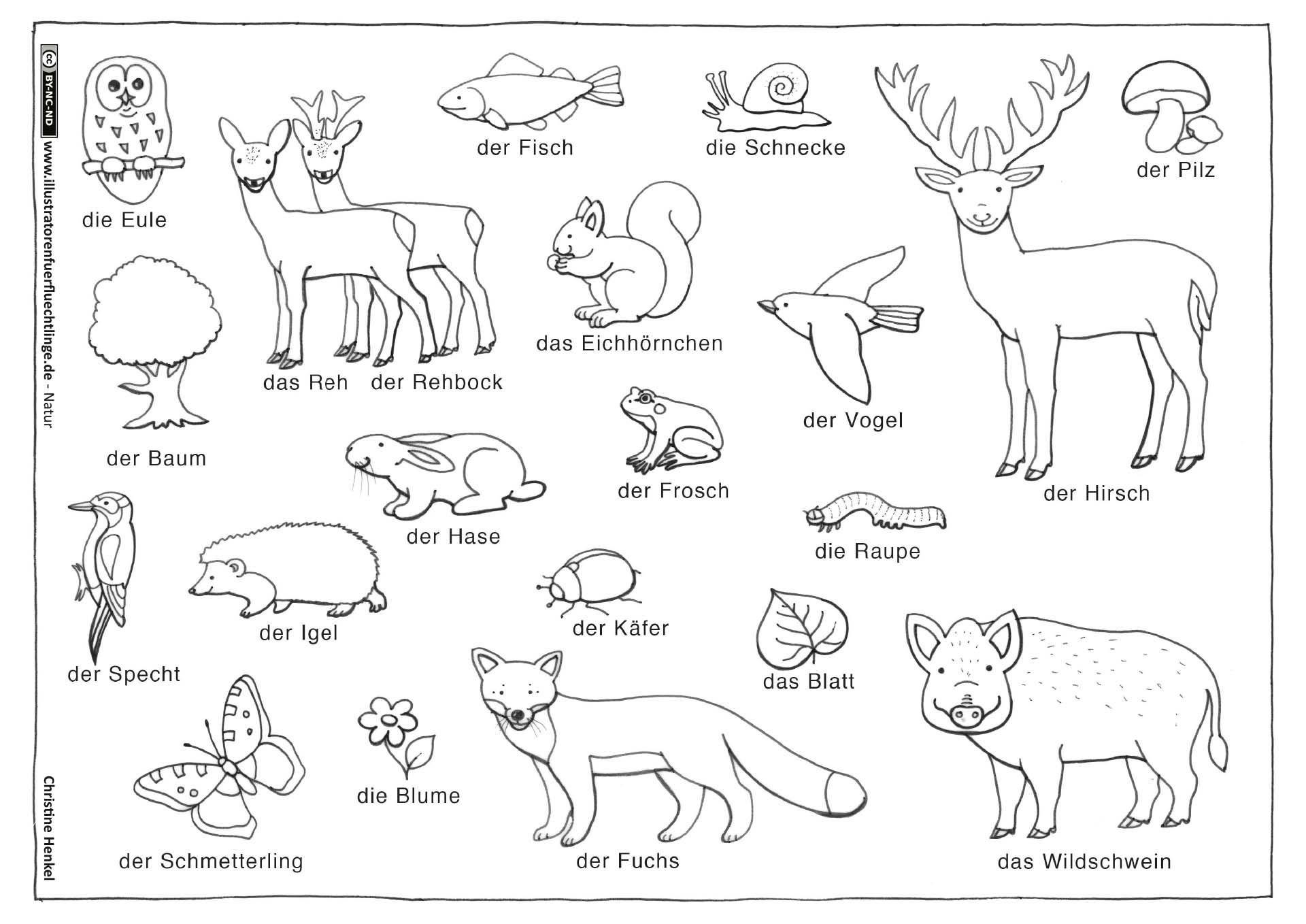 Download as PDF: Nature - Forest Animals Plants - Henkel#animals