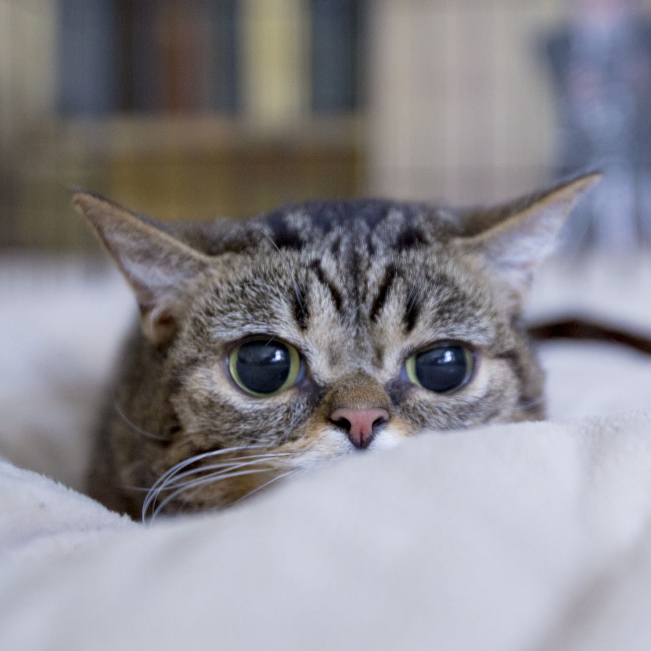 No one really knows what BUB sees. Cute cats, Animals