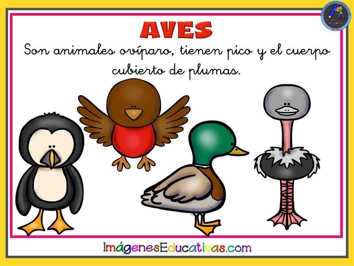 Tipos De Animales 10 Tipos De Animales Clasificacion De Animales Fichas De Animales