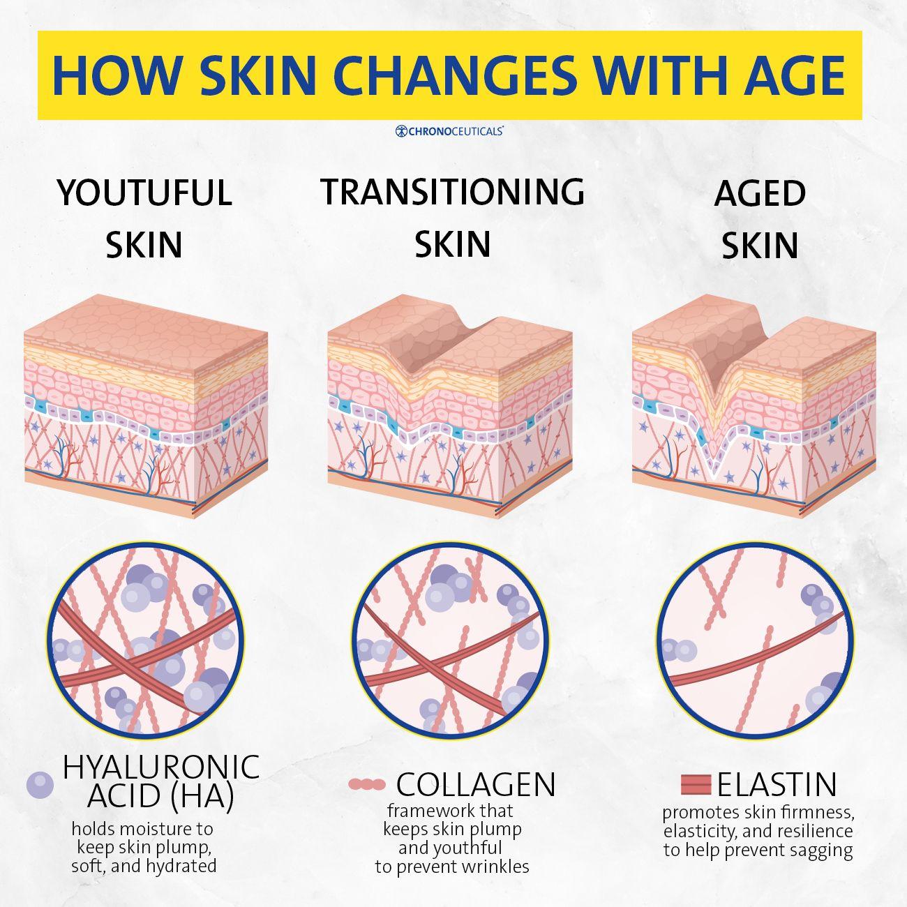 Dermachron® | Elastin, Skin, Skin plumping
