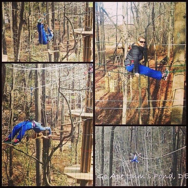 Group School Outings For Go Ape Zip Line Treetop Adventure Ziplining Go Ape Adventure Activities