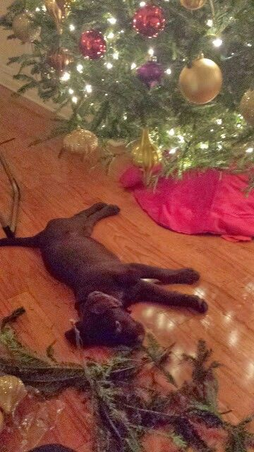 dempseys first christmas - Labrador Outdoor Christmas Decoration