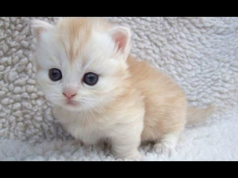 Cutest Animals Ever Are Cute Baby Animals These Top 10 Cute