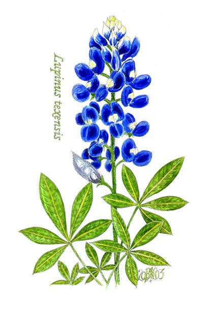 e5b820a3c4b62 Going to try to make a bluebonnet picture like this with fingerprints of  the little one as the petals.