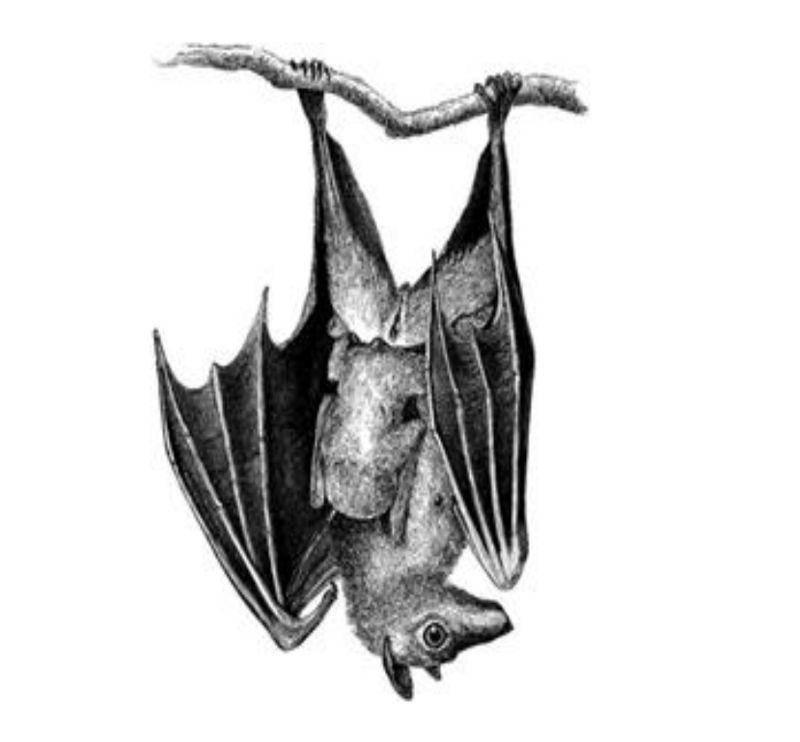 Bat Hanging Upside Down Preschool Lesson Plan Preschool Lesson