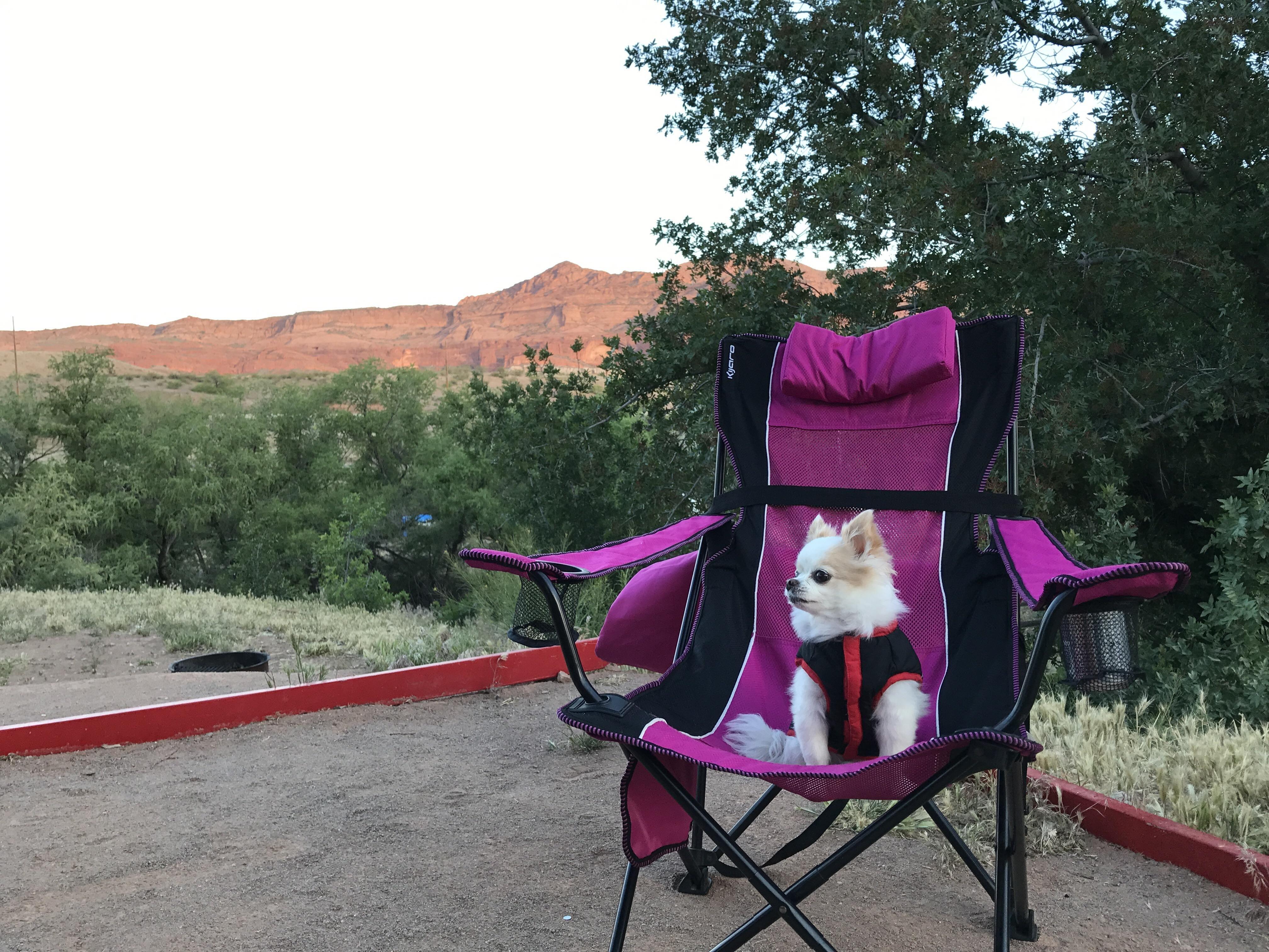 This little fluff loves camping. http://ift.tt/2q2edyX