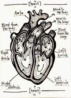 Abstract Human Heart Diagram Google Search Heart Anatomy