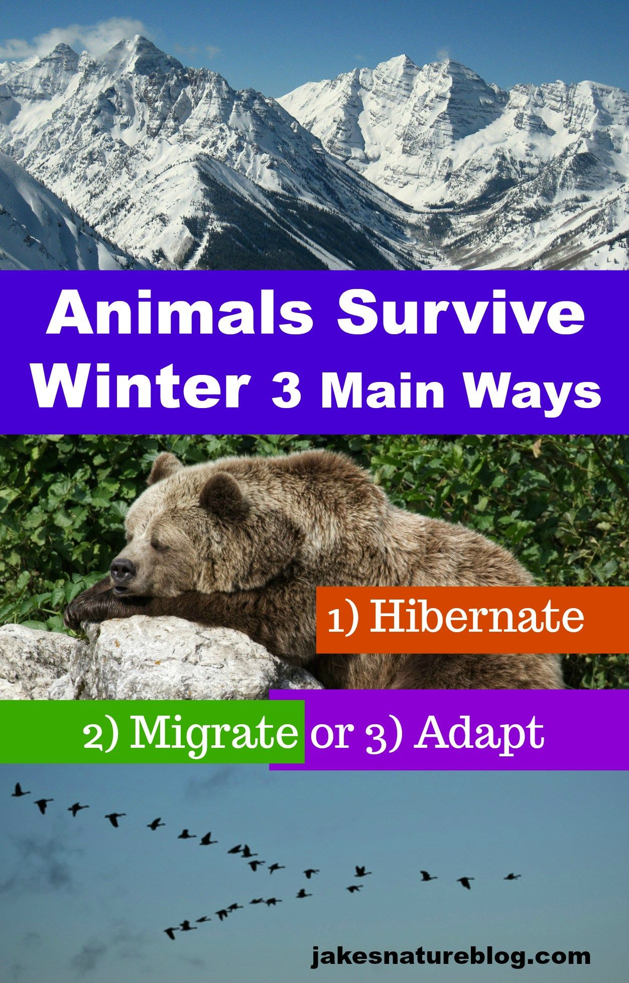 How Do Animals Survive The Winter In Rocky Mountains
