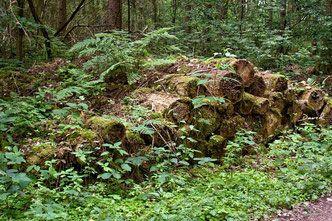 Holzstapel Sind Eine Einfache Methode Um Grossere Mengen Totholz Im Garten Zu Arrangieren Ohne Das Ordnungswurdige Nachbar Naturgarten Garten Naturnaher Garten