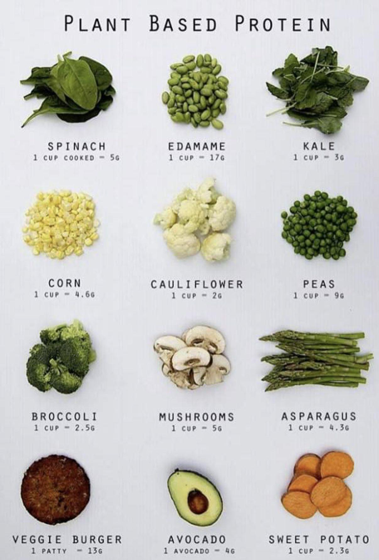 Plant based protein Vegan nutrition, Vegetarian diet