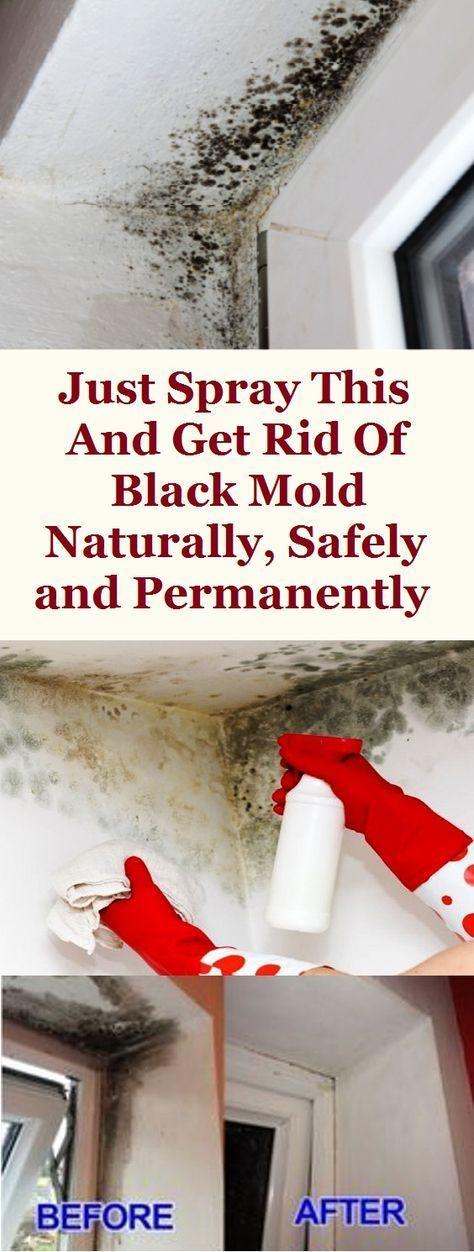 fff2c2a6d7bf263c6a061aec1fdea774 - How To Get Rid Of Red Mold In Bathroom