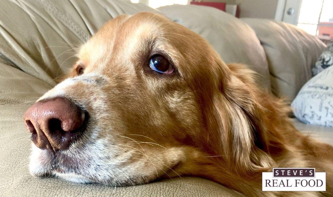 Funny Close Up Dog Tongue Cloth Face Mask Zazzle Com In 2020 Up Dog Face Mask Dog Face