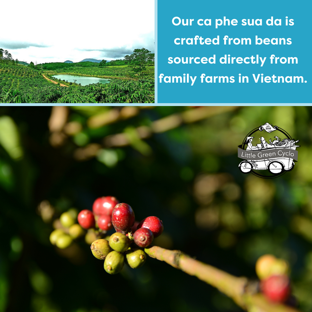 Vietnam, which produces both Robusta and Arabica beans, is the world's second-largest coffee producer and the world's largest producer and exporter of Robusta coffee beans. The perfect blend of Robusta and Arabica beans goes go into every can of our cà phê sữa đá. #coffee #coffeetime #coffeelover #coffeeaddict #coffeeshop #espresso #coffeegram #specialtycoffee #coffeelove #instacoffee #coffeelovers #coffeeholic #organiccoffee #coffeeoftheday #coffeebeans