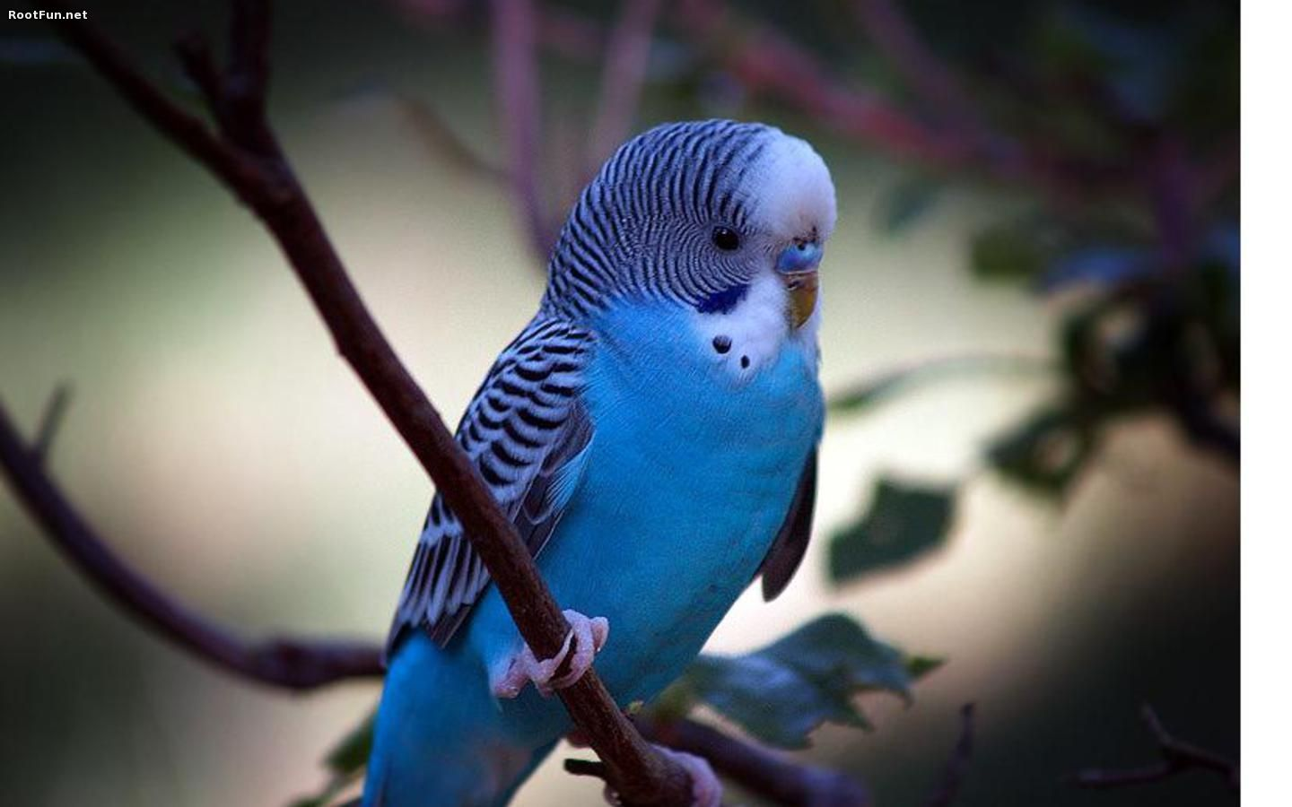 HD Blue Parrot Wallpaper Yellow Blue Parrot, Light