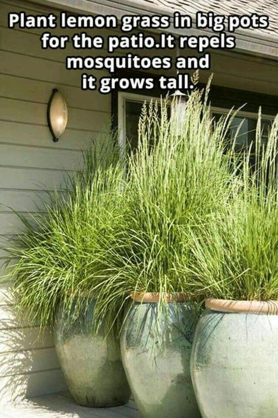 DIY Garden Decor Ideas for a Budget Backyard #budgetbackyard